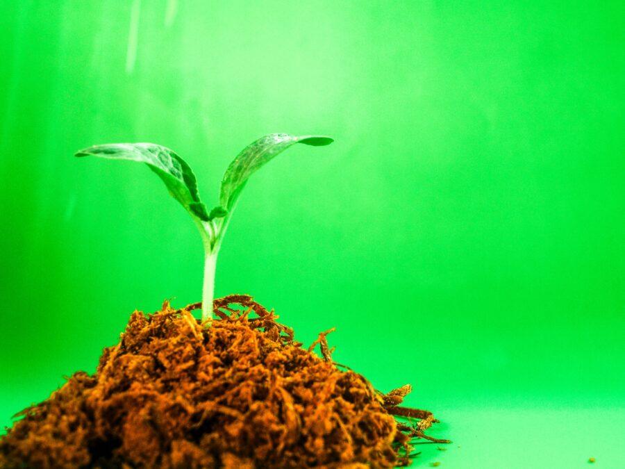 rozwój osobisty, szkolenie, roślina