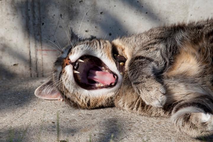 prokrastynacja lenistwo wypoczynek leniwy kot